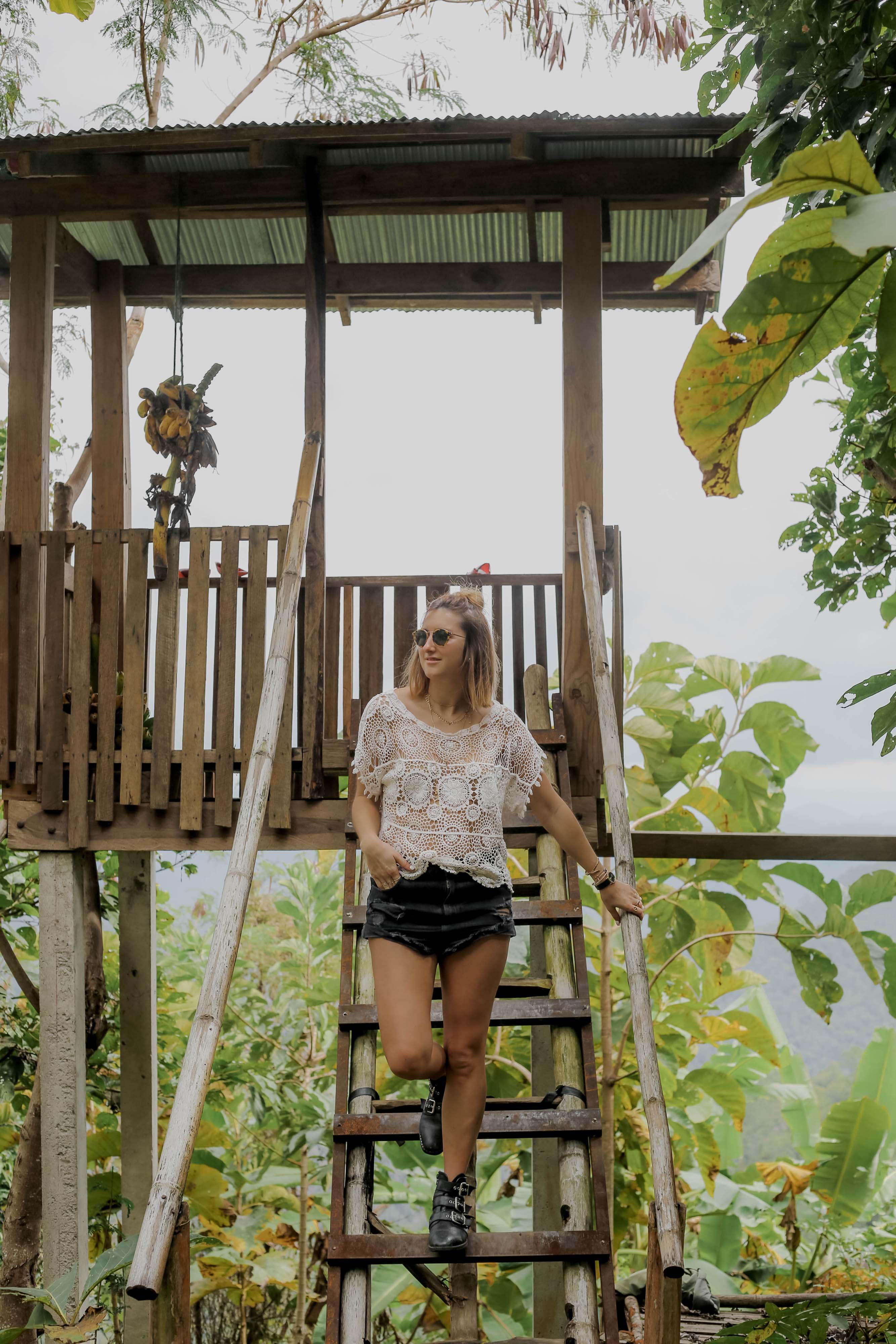 chauve souris des arbres thailande